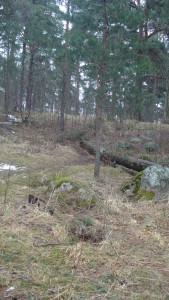 Valitsimme kuvan siksi, että siinä on puu, kivi ja lahonnut puu. Siinä oli vihreätä. Ihan kuin joku olisi asetellut sen. Ruoho alkoi kasvaa.